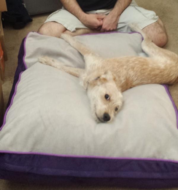 保護犬がベッドで寝る2