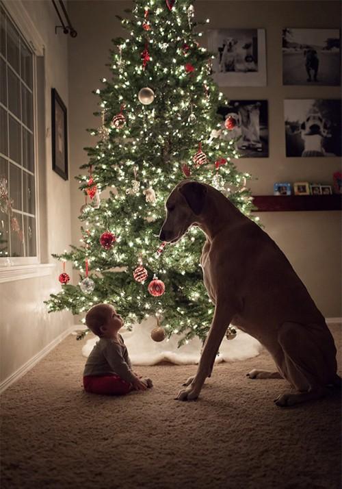 犬・猫のペットと成長する子供1
