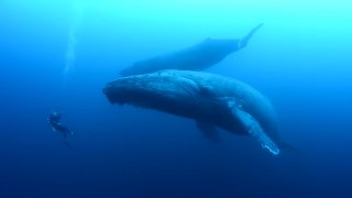 ザトウクジラに遭遇