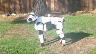 スターウォーズ犬