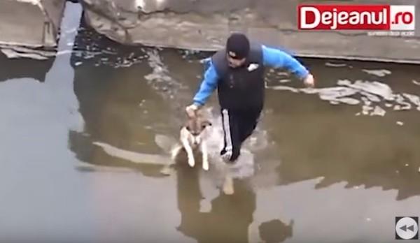 子犬の救出シーン