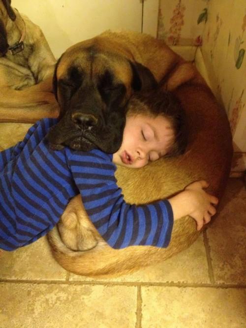 犬・猫のペットと成長する子供3