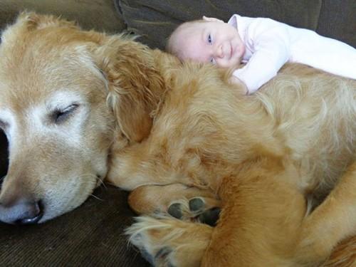 犬・猫のペットと成長する子供4
