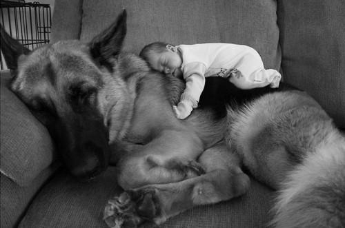 犬・猫のペットと成長する子供7