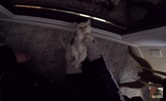 人形のように全く動かない猫