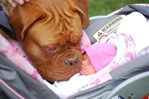 犬・猫のペットと成長する子供5
