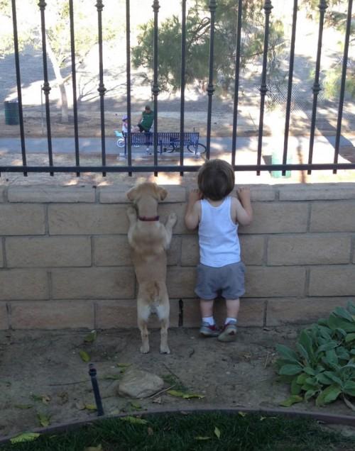 犬・猫のペットと成長する子供6