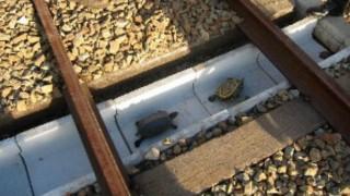亀を守るアイデア