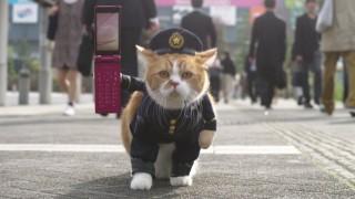 ふてニャンが警察官になる