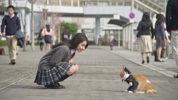 女子高生と猫