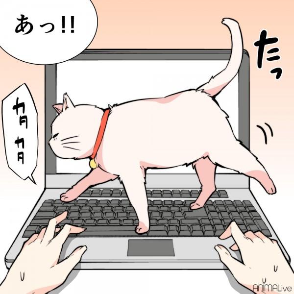 大好きな猫2