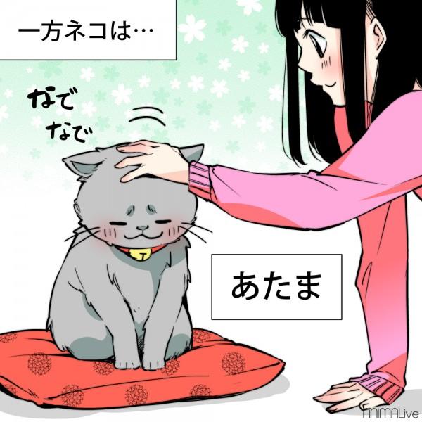犬と猫を撫でる4