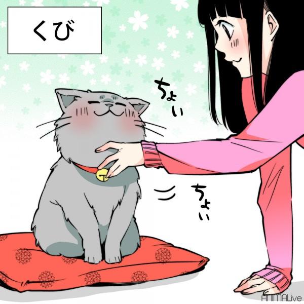 犬と猫を撫でる5