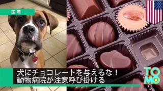 犬にチョコレート駄目