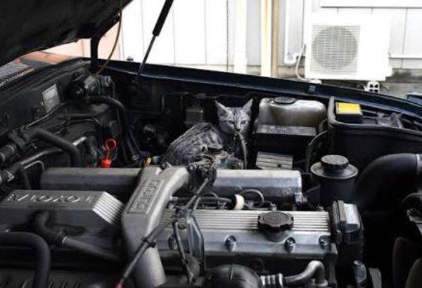 車に隠れる猫3