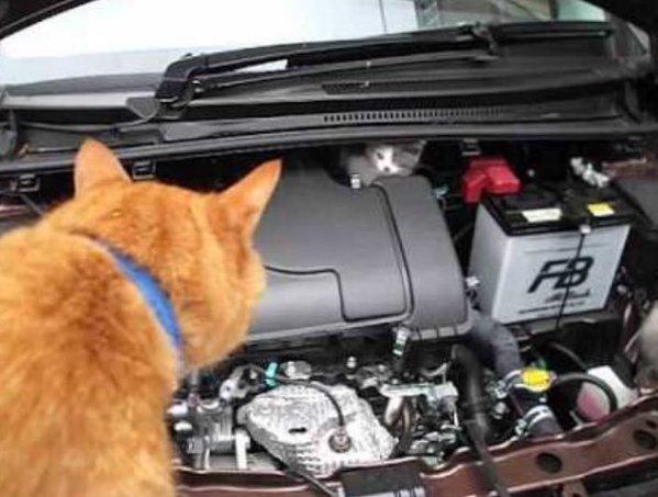 車に隠れる猫1