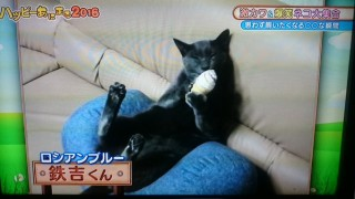 猫にチョコアイス
