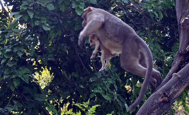 猿の木移動