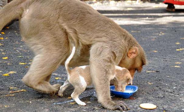 猿が犬を保護6