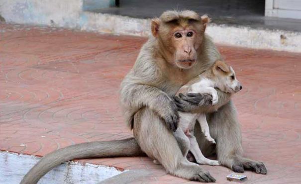 猿が犬を保護2