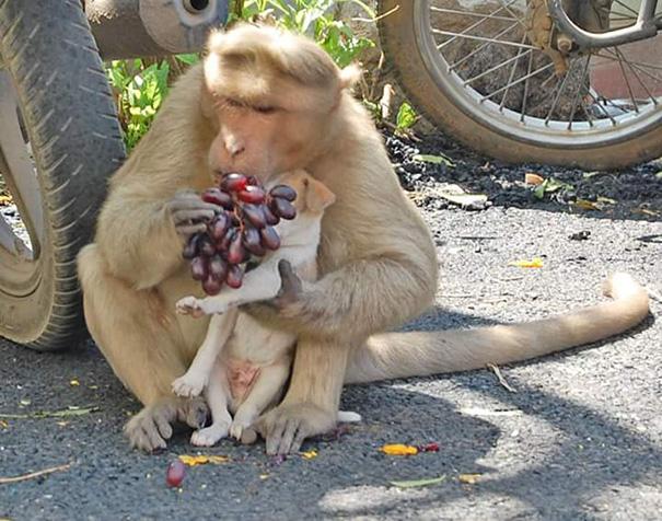 猿が犬を保護4