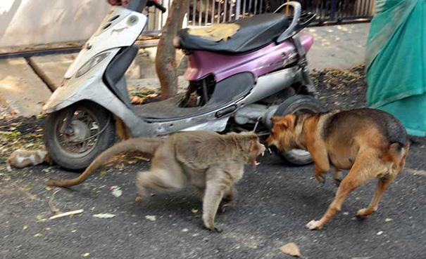 猿が犬を保護5