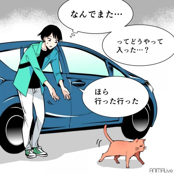 猫バンバン4