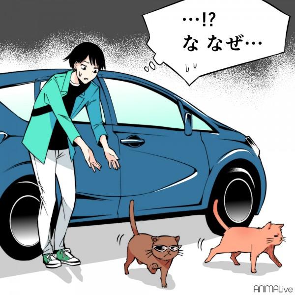 猫バンバン7