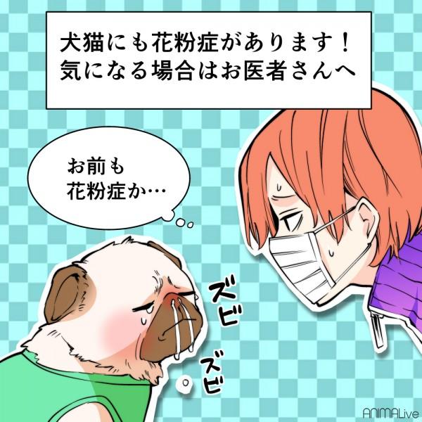 花粉症の犬4
