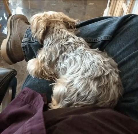 足で寝る犬1