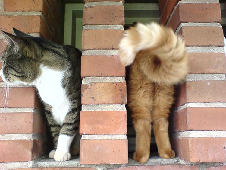 奇跡のタイミングの猫画像1