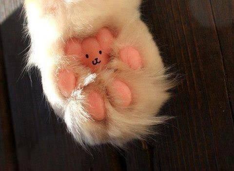 猫の肉球いたずら