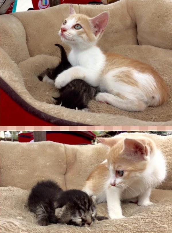 子猫の人生