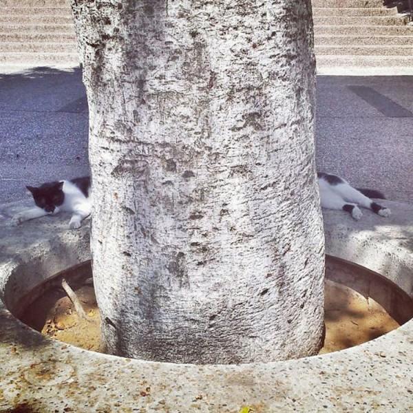 奇跡のタイミングの猫画像3