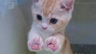 猫が肉球を見せる