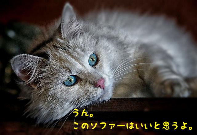 猫ソファー好き