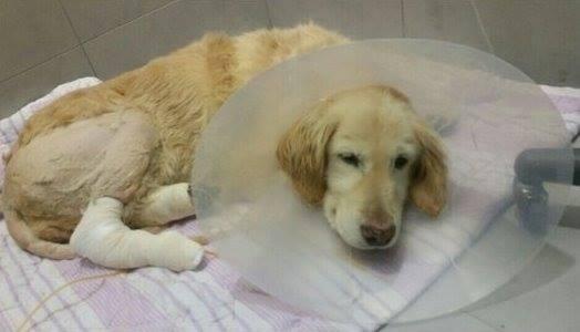 獣医の元で治療