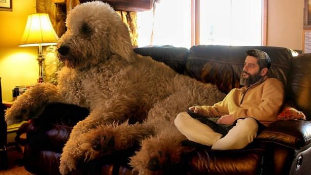 大きい犬と飼い主