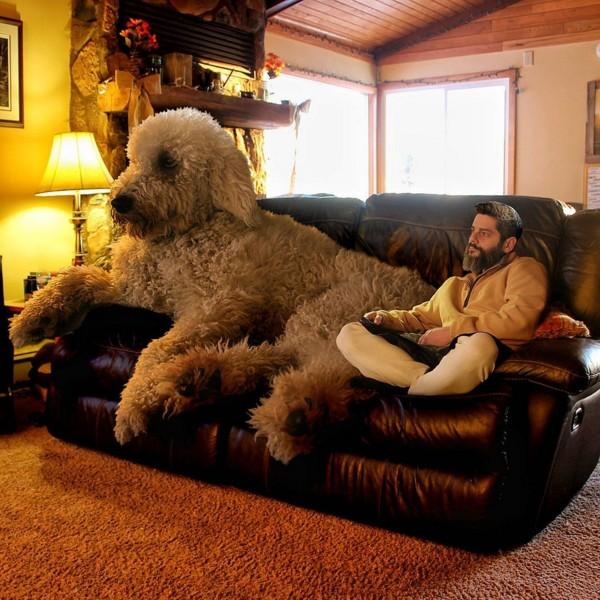 合成巨大犬と飼い主5