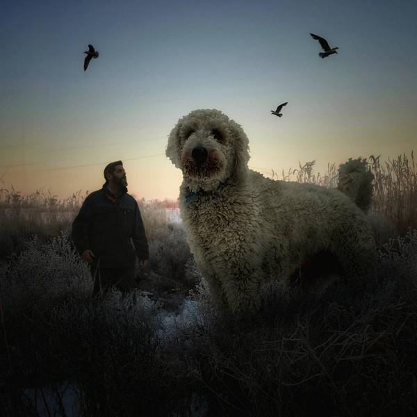 合成巨大犬と飼い主4