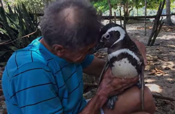 ペンギンと人