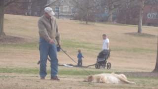 死んだふりをする犬