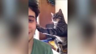 猫のなでなで