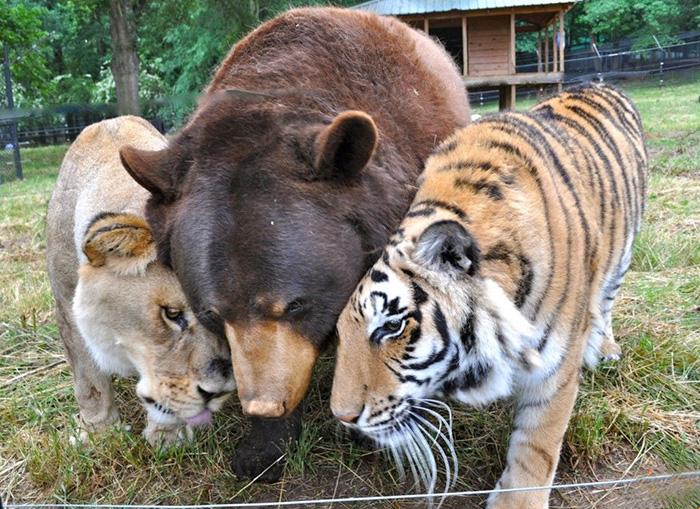 熊、虎、ライオン