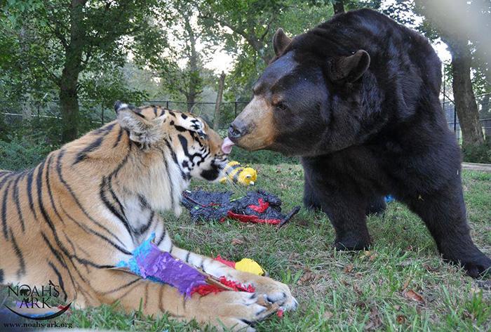 熊と虎とライオン3
