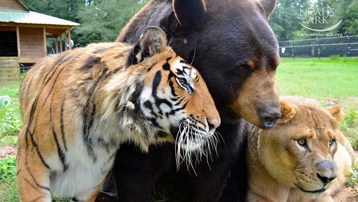 熊と虎とライオン2