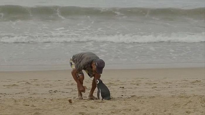 ペンギンと人間