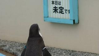 切ないペンギン