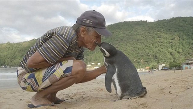 ペンギンが会いに来る