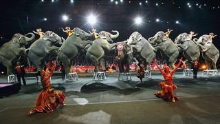 ゾウのサーカス